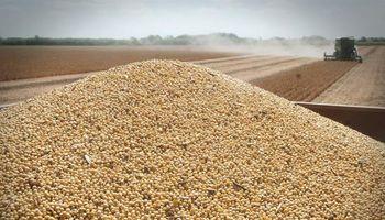 Soja: el Gobierno aguarda una definición de Monsanto