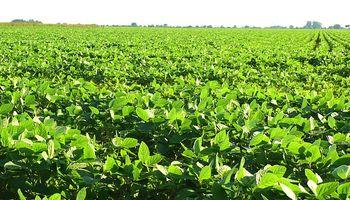 Monsanto: qué dice la resolución que publicará el Gobierno