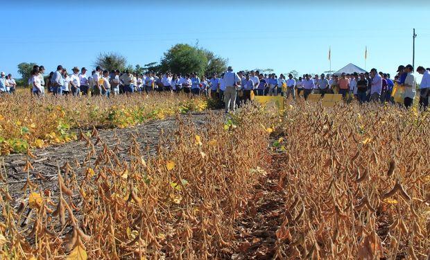 La diversidad de variedades de soja de grupos de madurez cortos y medios es una de las fortalezas de la oferta genética de Nidera.