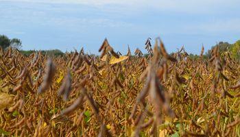 La Sociedad Rural de Rosario pide adelantar la rebaja de las retenciones a la soja