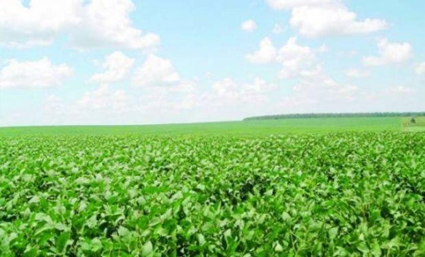 Paraguay quiere repetir la campaña de soja anterior