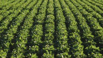 INPI denegó patentes a Monsanto