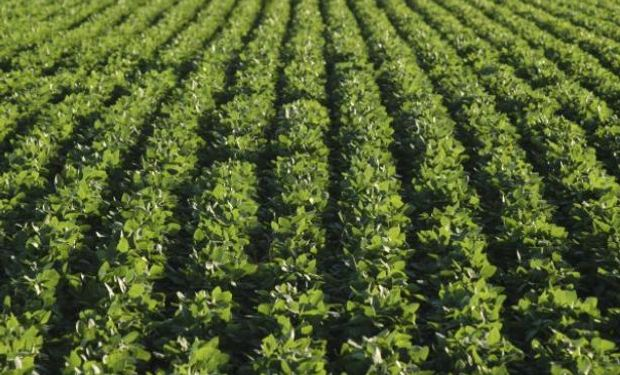 El INPI denegó patentes a Monsanto, pero la empresa apeló la medida.