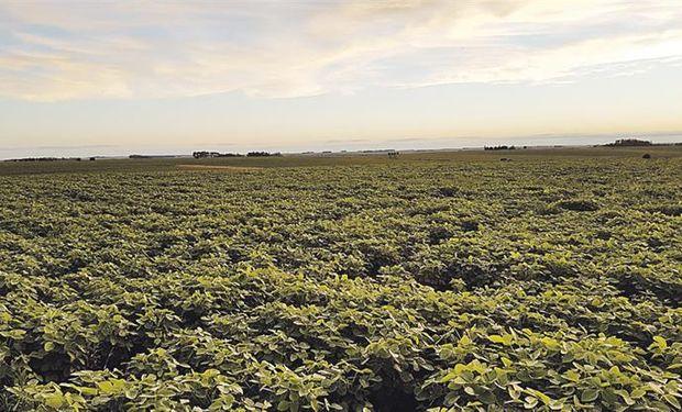 Faltan implantarse cerca de 1,3 millón de hectáreas de soja.