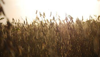 Cómo con el descuento de cheques se puede mejorar el precio de la soja en un 15 %