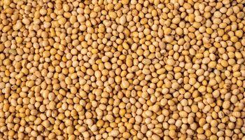 El precio disponible de la soja y el maíz subió en el mercado local