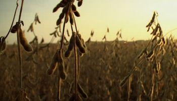 Prevén un horizonte de precios deprimidos para los granos