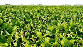 Soja: el combo altas temperaturas y sequía en etapa crítica impactó sobre el potencial de rinde