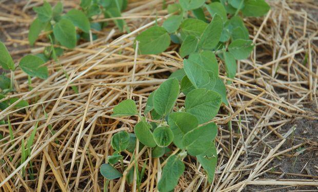Está retrasada la siembra de soja en el centro-norte de Sta. Fe