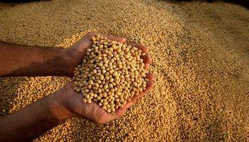 Soja: la Justicia suspendió una medida pedida por Monsanto contra una cooperativa de productores