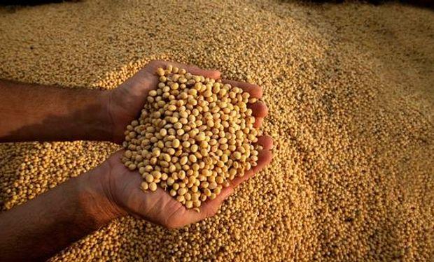 Justicia suspendió una medida pedida por Monsanto.