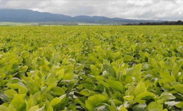La temprana decisión de bajar otro 5% en las retenciones ayuda a que el productor pueda planificar la siembra 16/17.
