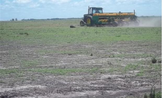 Lluvias favorecen siembra y desarrollo de soja de Argentina