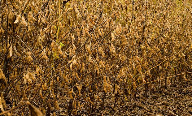 Por la falta de lluvia, declararán la emergencia del agro en Santa Fe