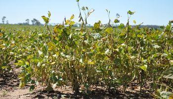 Estiman que la sequía en el campo le costará al país US$3436 millones