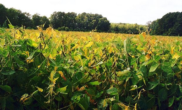 Brasil: Descartan récord de soja en Paraná