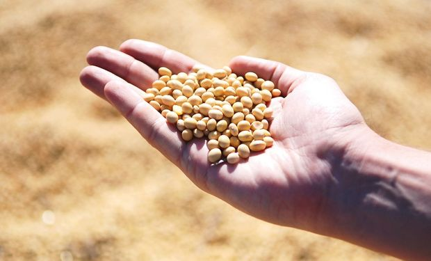 Productores que deberán presentar la declaración jurada con información acerca del origen de la semilla de soja.