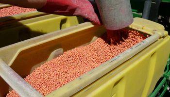 La asociación natural que ayuda a la soja a resistir la sequía