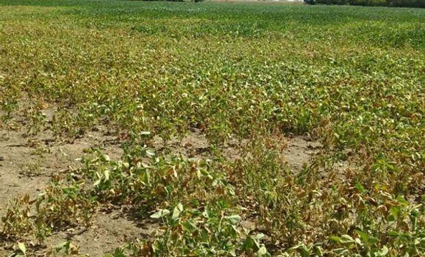 Solo donde no hubo sequía los márgenes podrían mejorar por la suba de precios