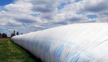 Aún queda el 40% de la cosecha de soja sin vender