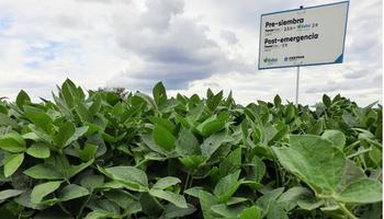 Una nueva agricultura: se presenta este mes el Sistema Enlist para los productores argentinos
