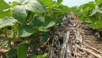 EE.UU. aumentaría la superficie sembrada con soja en 2014