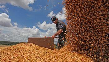 El USDA informó un fuerte aumento en los stocks mundiales de soja