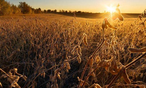 CBOT: los contratos de trigo, maíz y soja finalizaron con ganancias.