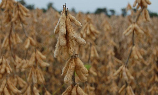 Los futuros de la soja suben en Chicago