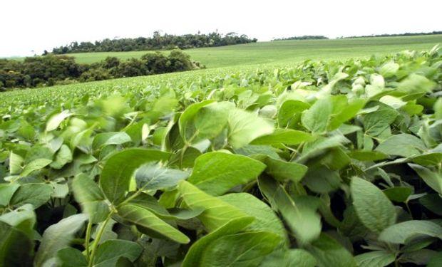 En algunos estados de Brasil se recortaría el área a sembrar.