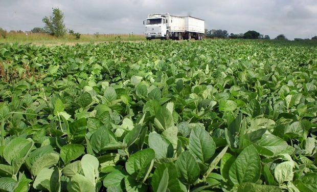 La soja fue en 1996 el primer cultivo transgénico aprobado.