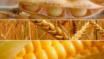 Ventas de soja, trigo y maíz esperan el ballottage