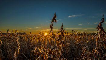 USDA: menores stocks impulsan a la soja