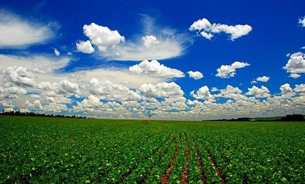 Se espera un alza para la cosecha de soja 2014/15 en Argentina hasta llegar a 55,6 millones de toneladas y un recorte en la de Brasil a  94,7 millones de toneladas