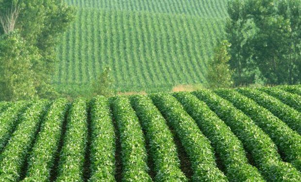 Si bien un aumento en el área a sembrar no garantiza una mayor producción, la estimación inicial podría presionar los precios.