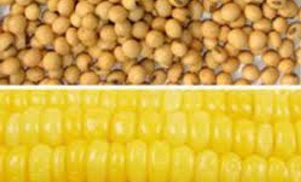 Allendale estima menos maíz y soja que el USDA