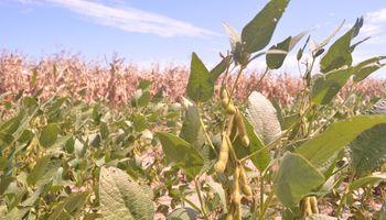Las mejores condiciones climáticas presionan a los principales granos