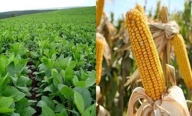 Por el lado de la soja, la demanda sigue activa, y las alzas en maíz también traccionan un poco a la oleaginosa.