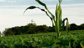 Fondos especulativos retiran posiciones en soja y maíz