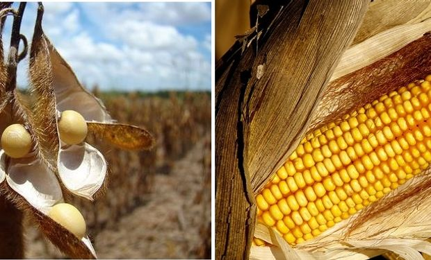 Nuevos híbridos de soja y maíz fueron las estrellas de los encuentros.