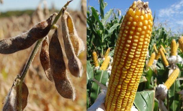 $3.380 y $2.200 fueron los valores de la soja y el maíz disponibles.