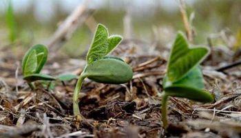 Soja: La evolución del clima, un factor crítico para concretar los planes de siembra