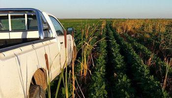 Crecen más de un 23% los patentamientos de camionetas en lo que va de julio