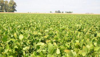 Cae la soja tras el informe del USDA
