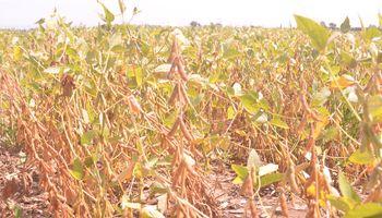 Alertan que es récord la producción de soja que no está cubierta del riesgo de baja de precios