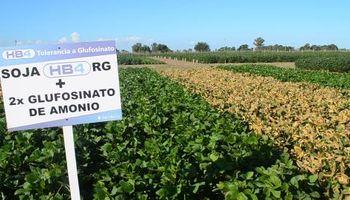 Estados Unidos aprobó la soja tolerante a sequía desarrollada por Bioceres