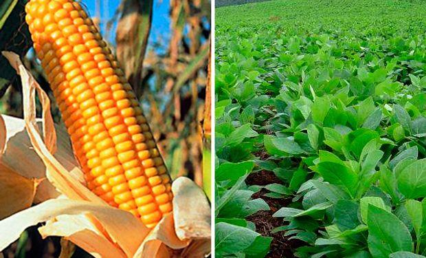 Bajas para la soja y el maíz en CBOT