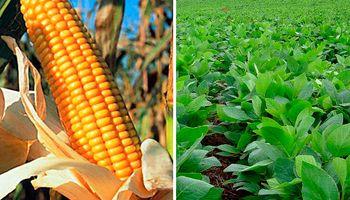 Soja y maíz: elevan proyección de producción nacional