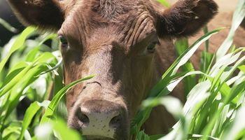 Sorgo: 40 productores probaron la nueva tecnología que revoluciona al biotipo forrajero