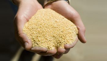 """Hay """"optimismo"""" por la apertura de China a la harina y el aceite de soja de la Argentina"""